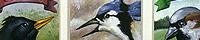 Aviary #1 - 9 Birds