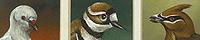 Aviary #2 - 9 Birds