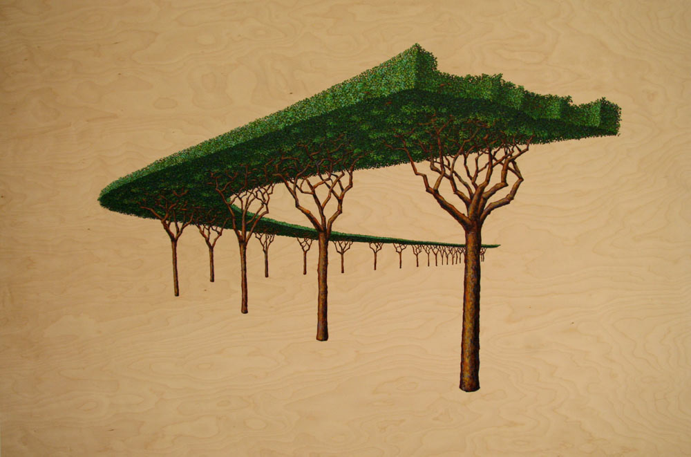 Canopy, David Lefkowitz, 2008