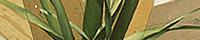 Tall Grass Hybrid